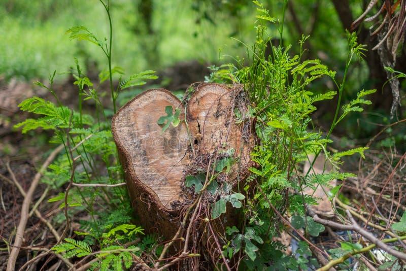 Отрежьте дерево в лесе, покрытом с заводами стоковые фото