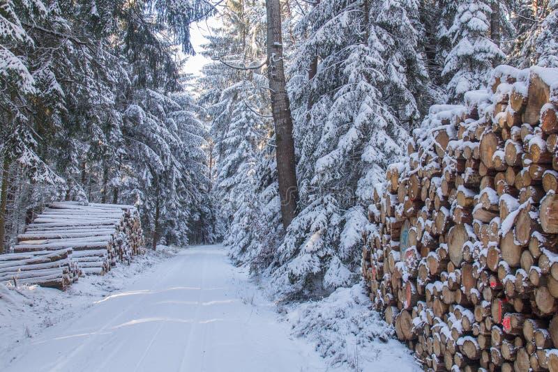 Отрежьте и штабелировал тимберс сосны в лесе в зиме стоковое фото