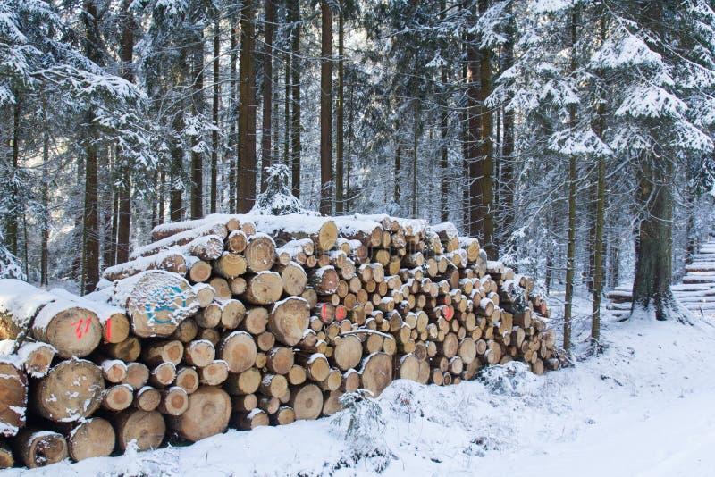 Отрежьте и штабелировал тимберс сосны в лесе в зиме стоковая фотография