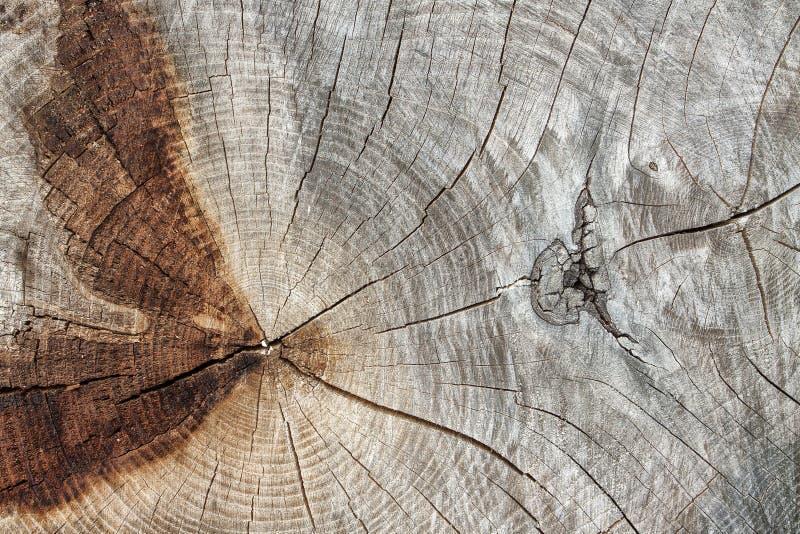 Отрежьте конец крупного плана ствола дерева стоковые изображения rf