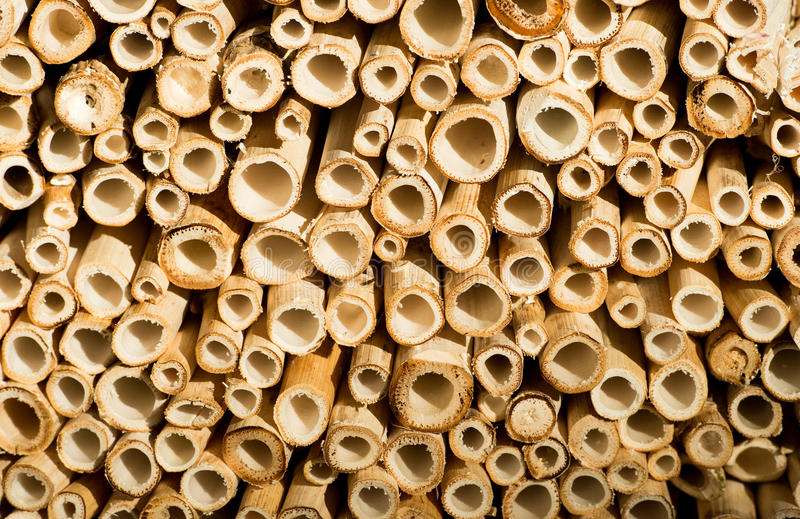Отрежьте предпосылку ручек бамбука стоковая фотография rf