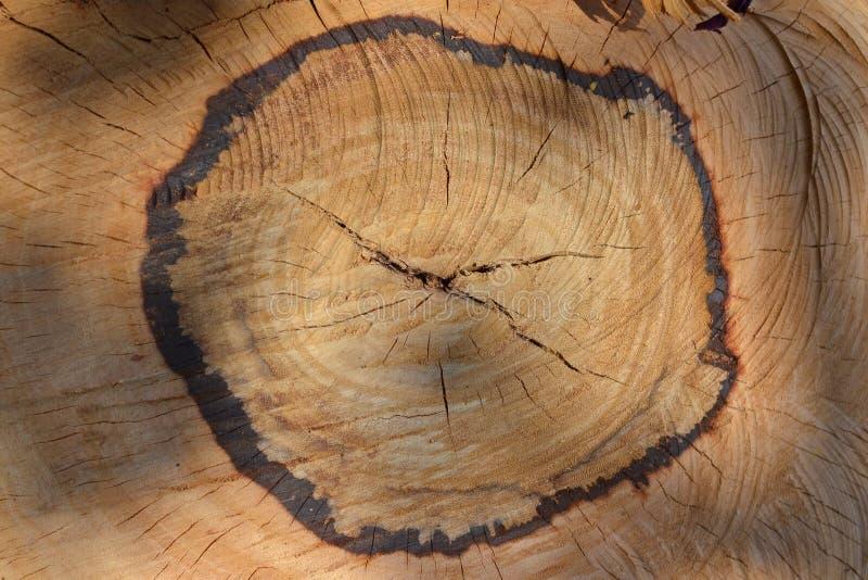 отрежьте древесину текстуры стоковая фотография