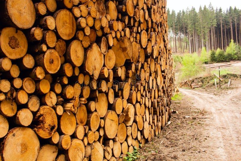 Отрежьте сосну внутри поперечного сечения леса молодой сосны стоковые фото