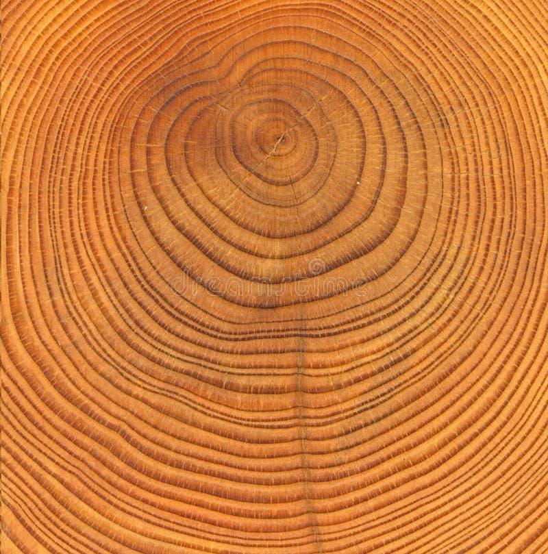 отрежьте текстуру деревянную стоковые изображения