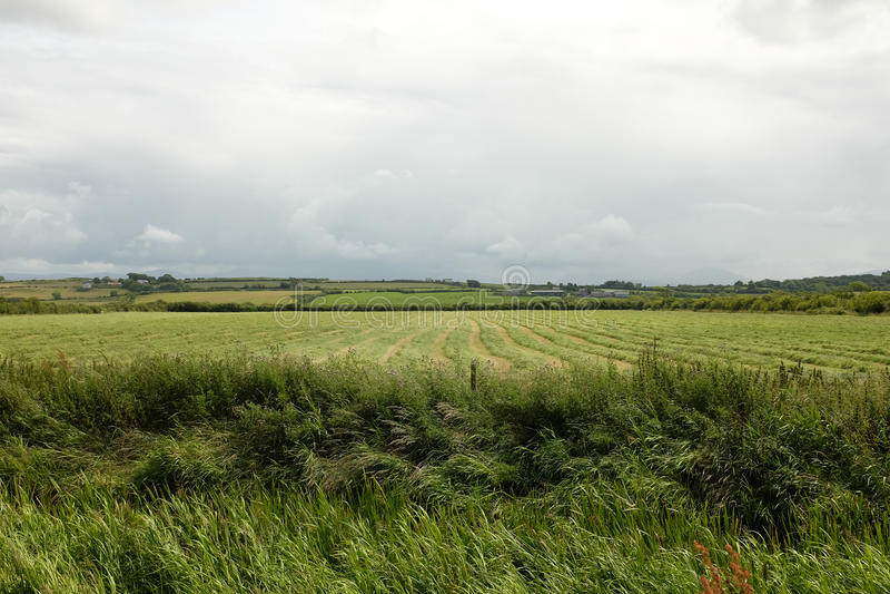 Отрежьте траву луга стоковые фото