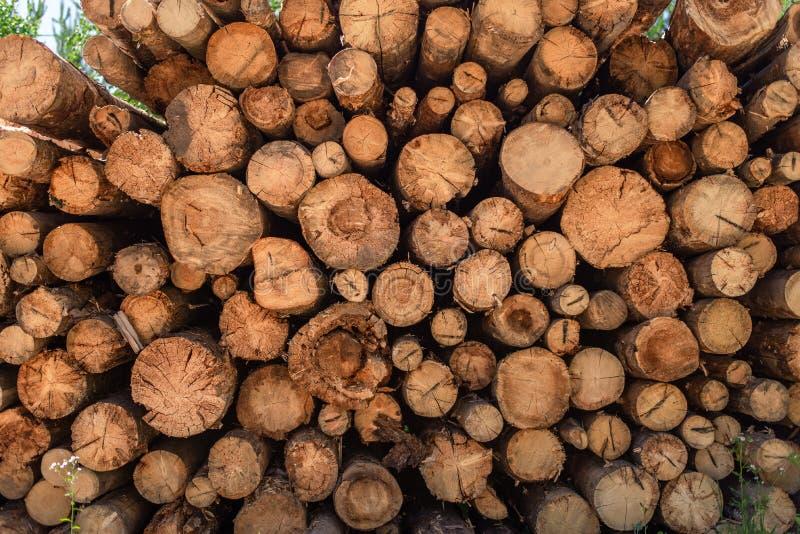 Отрезанная древесина, обезлесение, штабелированные журналы, конец-вверх стоковая фотография rf