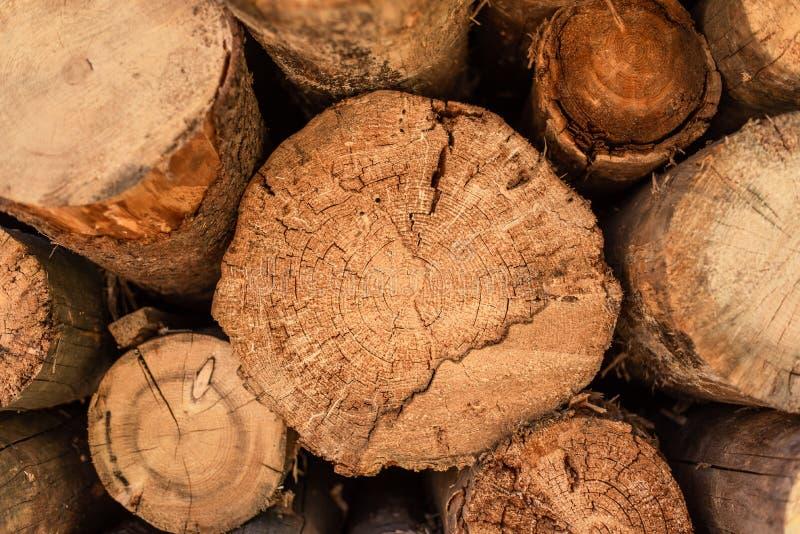 Отрезанная древесина, обезлесение, штабелированные журналы, природа конца-вверх стоковое изображение rf