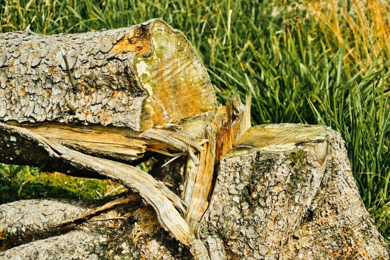 Отрезанный спуск и сломленный ствол дерева на зеленом луге, разрушение стоковые фото