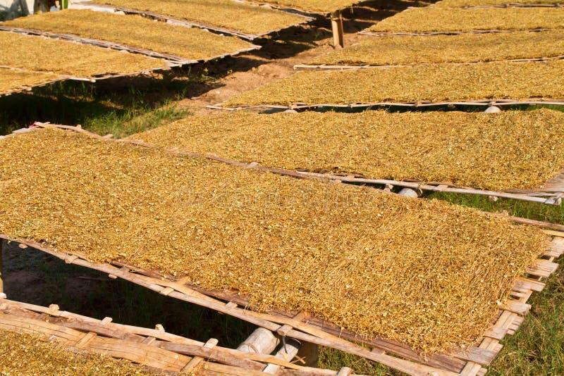 Отрезанный табак на bamboo плите стоковое фото
