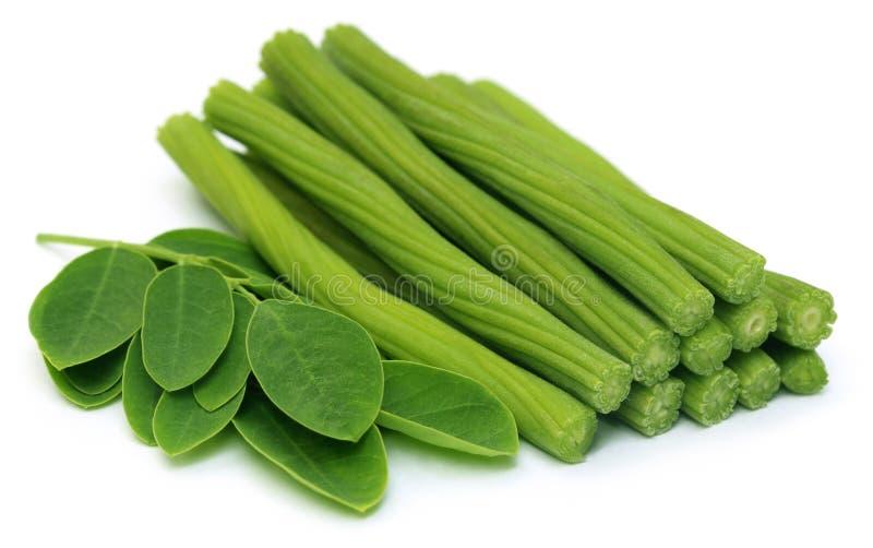 Отрезанный Moringa Oleifera или sonjna с листьями стоковое изображение rf