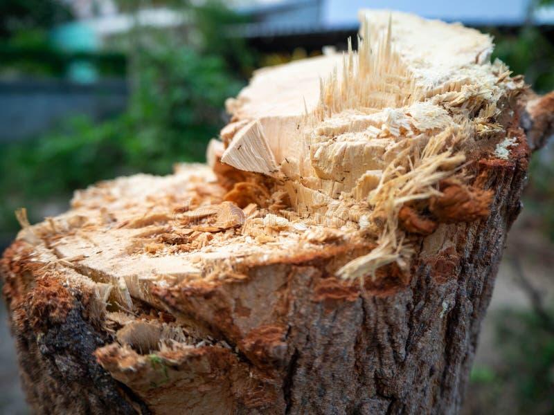 Отрезок дерева, отрезал текстуру древесины, дом сада, Таиланд стоковое фото rf