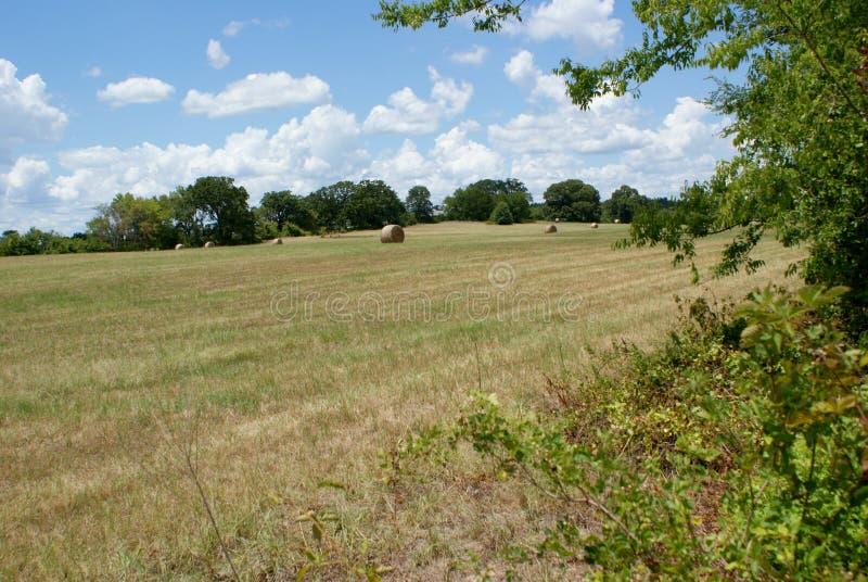 Отрезок и тюкованный луг сена в восточном Техасе стоковое изображение