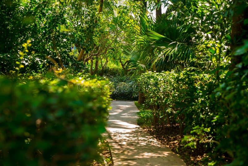 Отстаньте в тропических джунглях в после полудня Тропик в парке Каменная дорога в лесе стоковое изображение rf