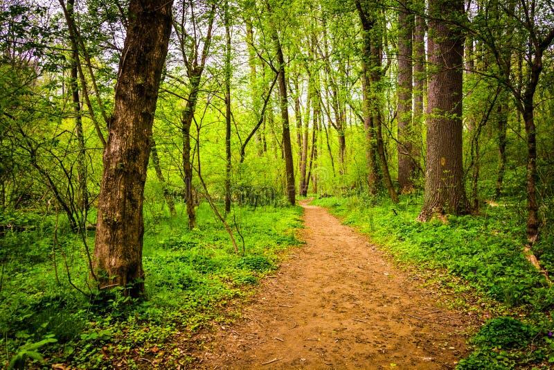 Отстаньте через лес на Lancaster County Central Park, Penns стоковая фотография