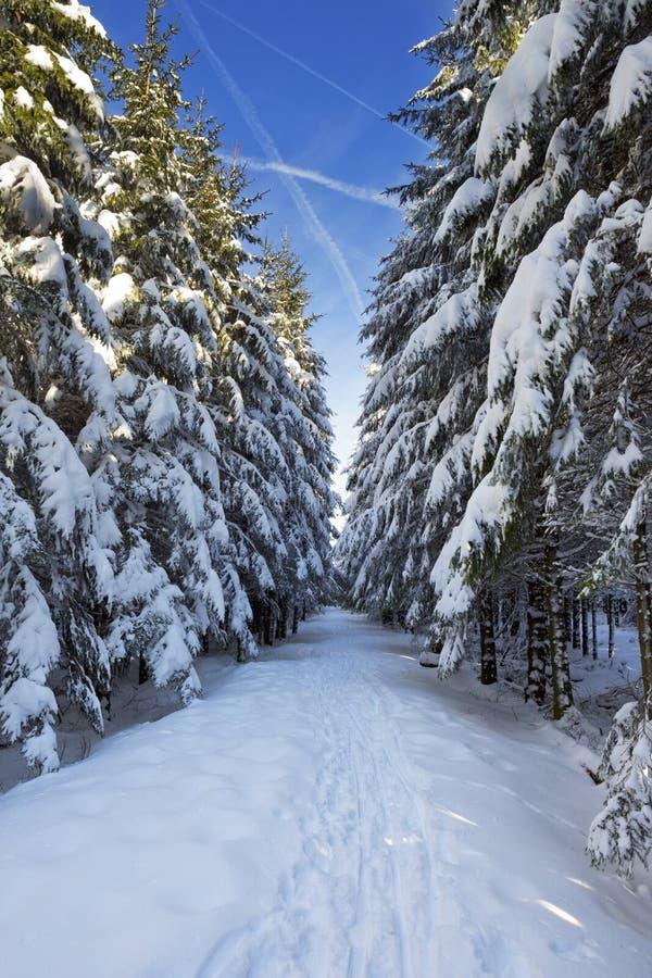 Отстаньте через красивый лес зимы на ясный день стоковая фотография rf