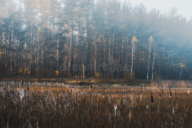 Отфильтрованное Moody изображение Мисти Утро на озере осенью стоковые фотографии rf