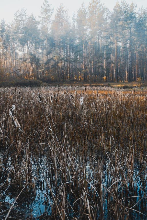 Отфильтрованное Moody изображение Мисти Утро на озере осенью стоковые изображения