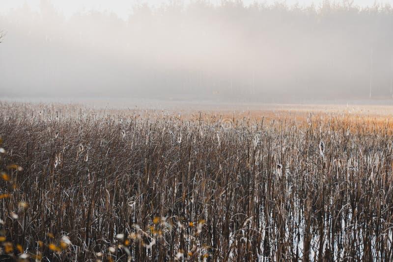 Отфильтрованное Moody изображение Мисти Утро на озере осенью стоковое фото rf