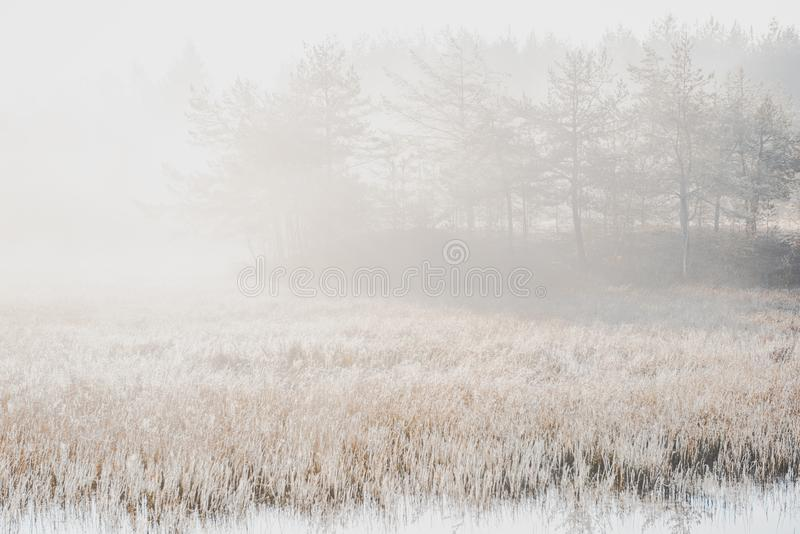 Отфильтрованное Moody изображение Мисти Утро на озере осенью стоковое изображение
