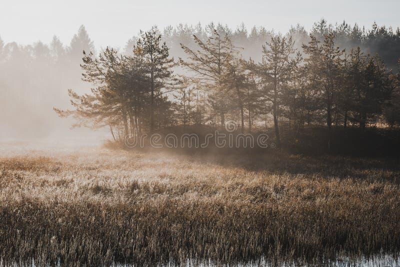 Отфильтрованное Moody изображение Мисти Утро на озере осенью стоковое изображение rf