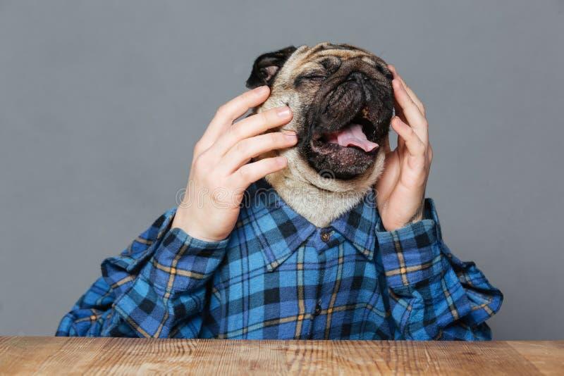 Отчаянная унылая собака мопса с человеком вручает сидеть и плакать стоковая фотография rf