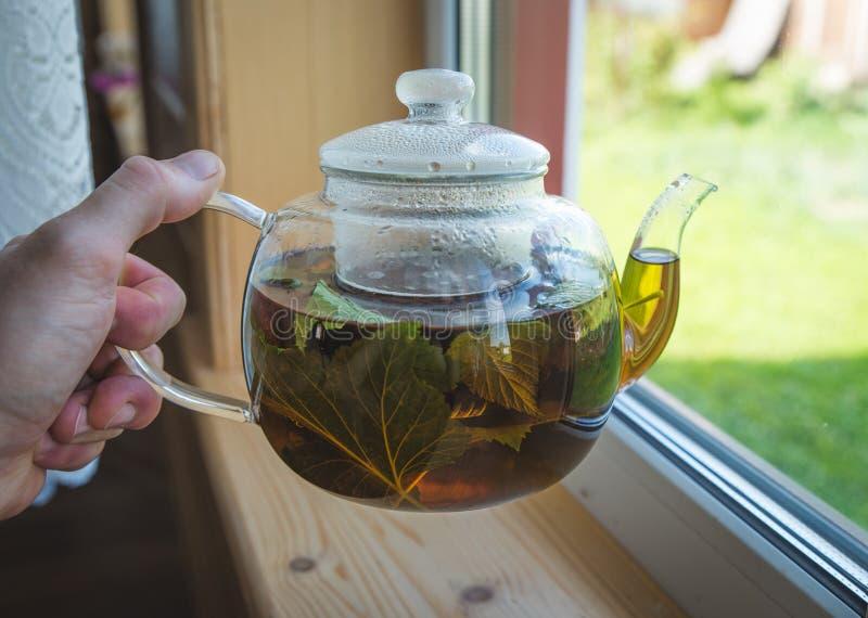 От прозрачного стеклянного чайника полейте черный чай в стеклянной кружке, накаляет в солнце последними лучами стоковая фотография