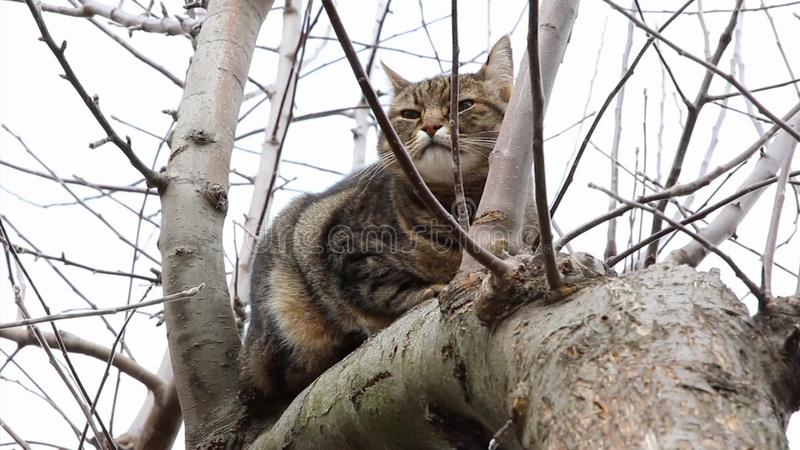Отдыхать кота видеоматериал