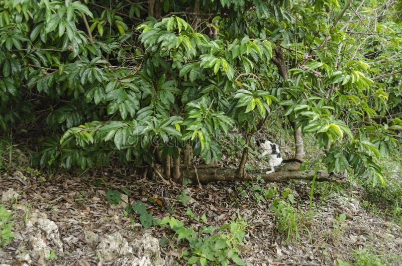 От Hotizntal дерево растет вертикальные ветви иллюстрация вектора