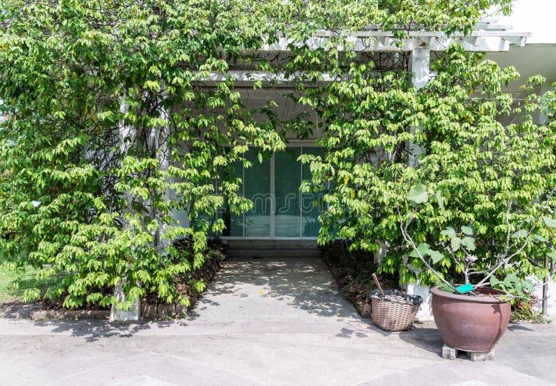 Офис парка который покрыт с деревьями стоковое фото