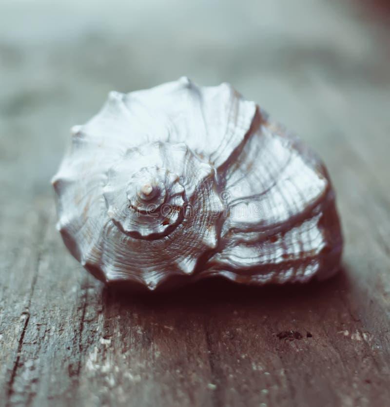 Оформление раковины моря стоковые фотографии rf