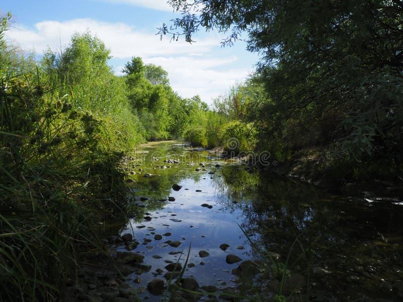 Охладитель болота стоковые изображения rf