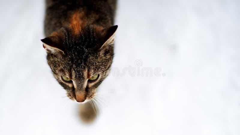 охотник молчком стоковые фотографии rf
