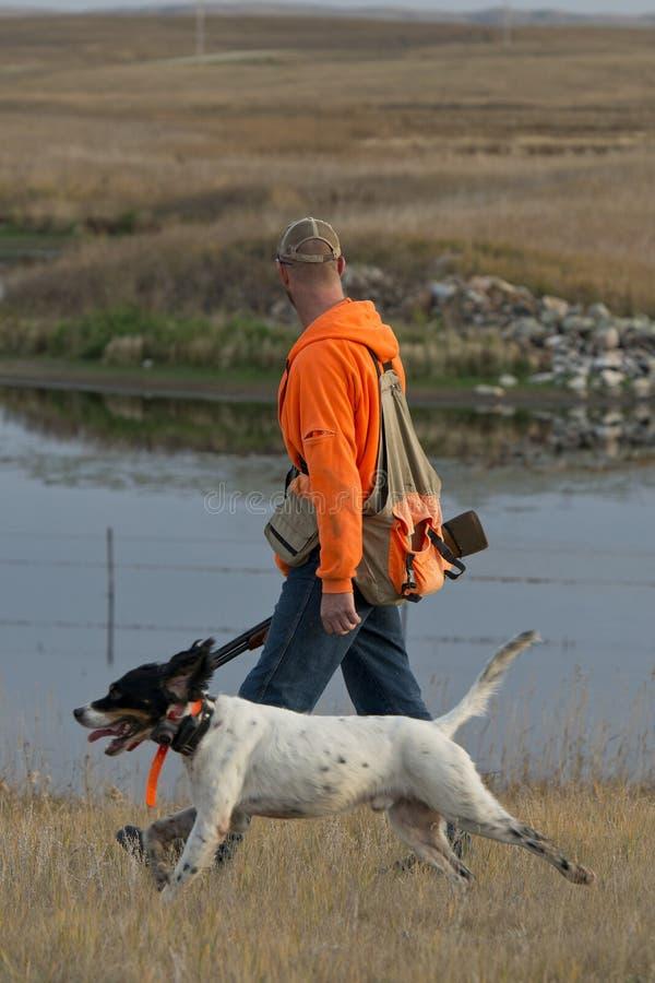 Охотник фазана стоковые изображения rf