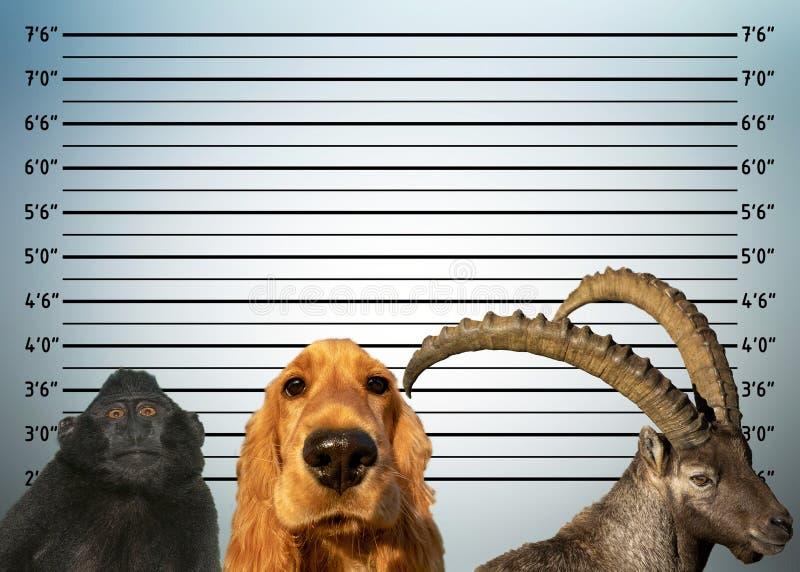 Охраните компановку фотографии оленей steinbock обезьяны собаки животных стоковая фотография