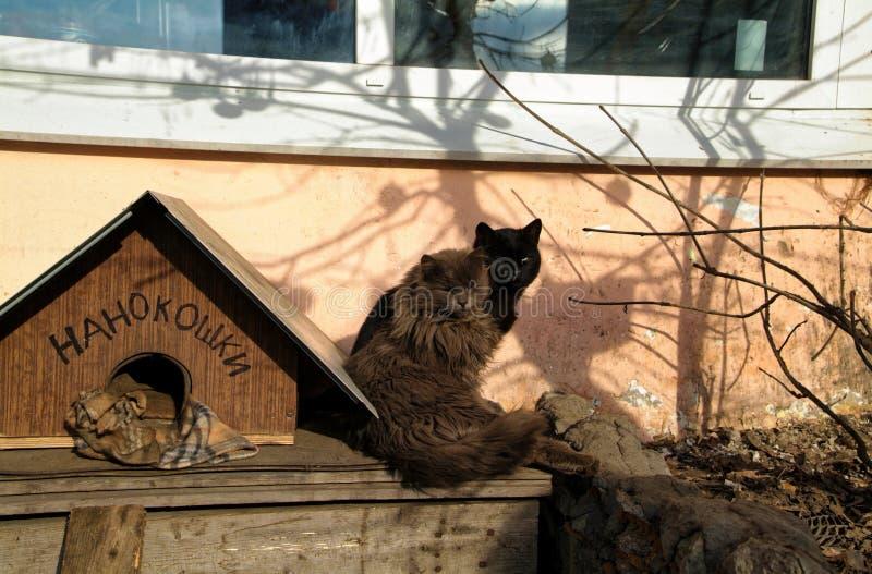 Охранники котов в индустриальной зоне стоковые изображения