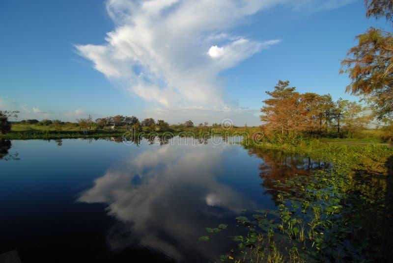Охраняемая природная территория соотечественника Loxahatchee стоковое фото rf