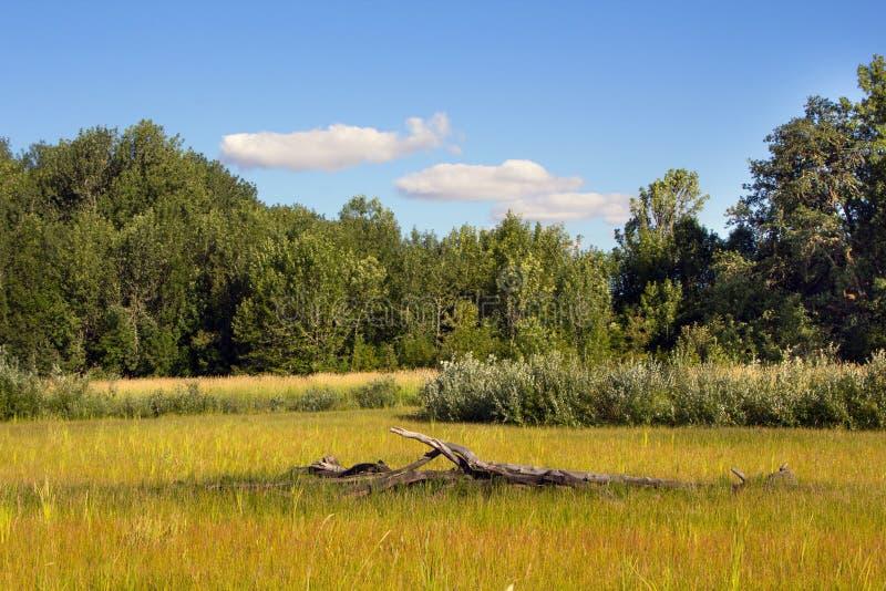 Охраняемая природная территория соотечественника Finley стоковые фото