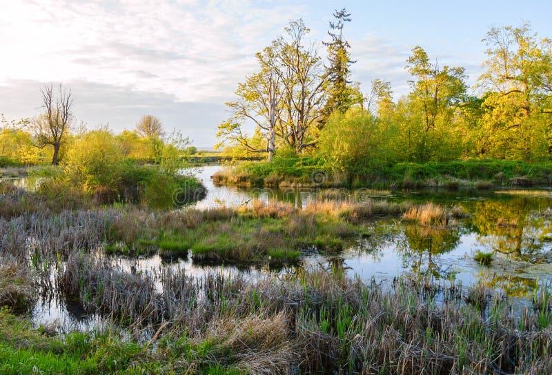 Охраняемая природная территория соотечественника Nisqually стоковые фото