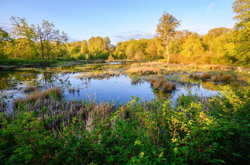 Охраняемая природная территория соотечественника Nisqually стоковые изображения