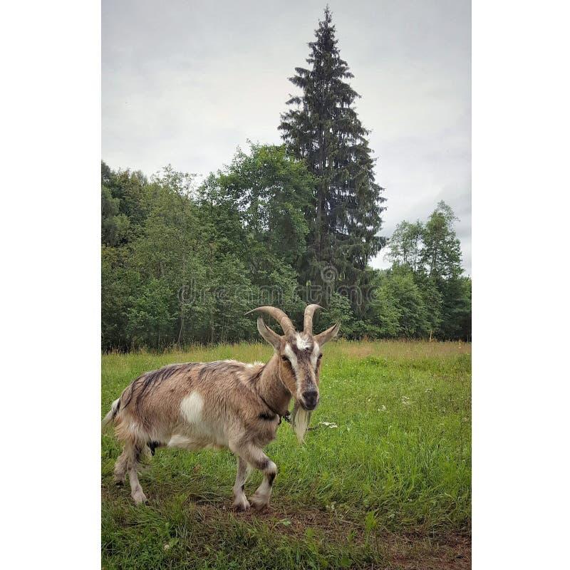 Очарование животной страны стоковое изображение rf