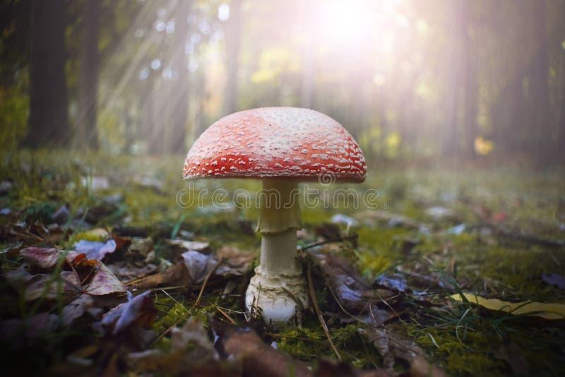 Очаровательный гриб стоковая фотография rf