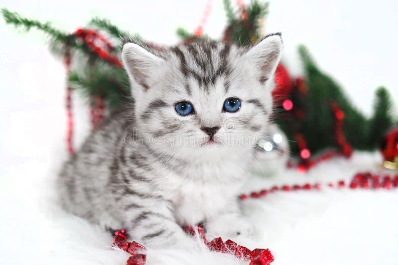 Очаровывающ, милый котенок стоковые фотографии rf