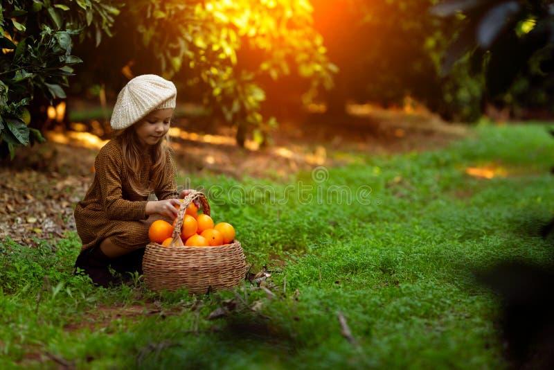 Очаровывая девушка собирая апельсины в корзине стоковое фото rf