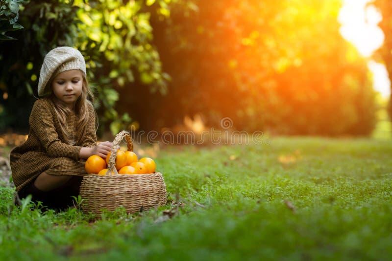 Очаровывая девушка собирая апельсины в корзине стоковое фото