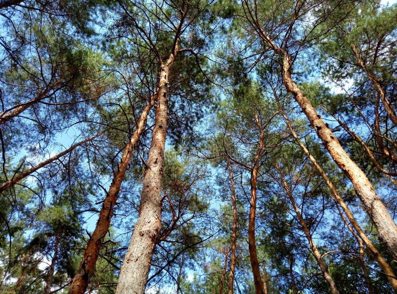 очень большой и красивый лес стоковая фотография rf
