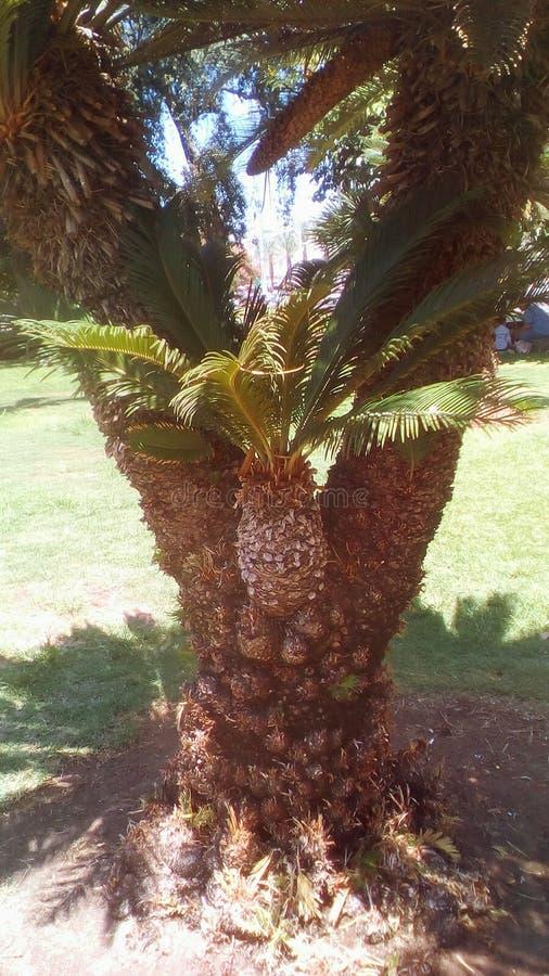 Очень интересная пальма стоковое фото rf