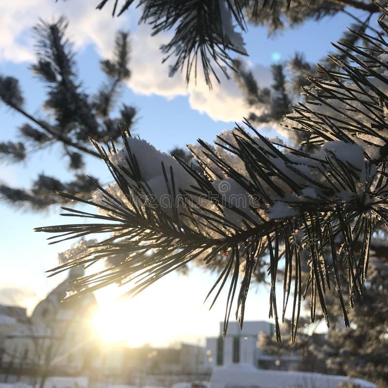 Очень красивая ветвь с солнцем стоковые фото