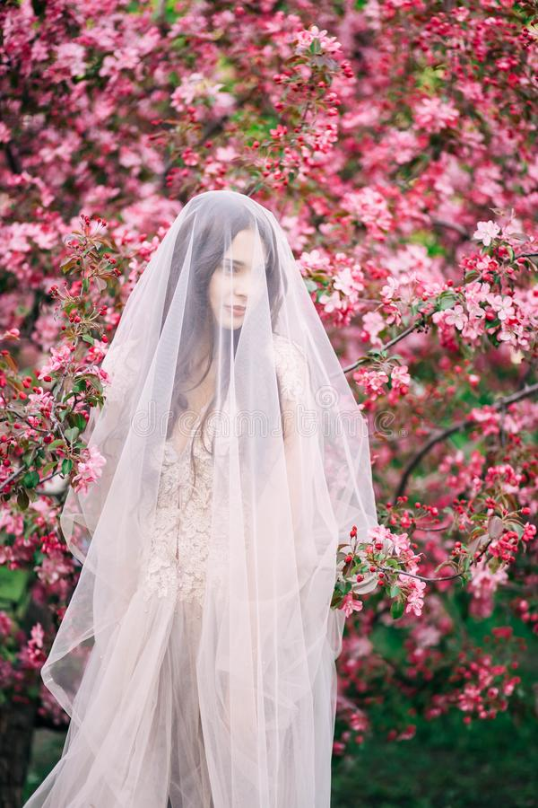 Очень красивая девушка невеста под вуалью, бежевое платье свадьбы около дерева Сакуры смотрит вниз, стоковая фотография