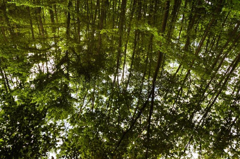 Очень красивый ландшафт лета горы горы озера lac de Франции creno Корсики корсиканские Малый потерянный lak стоковая фотография