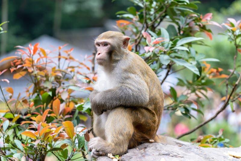Очень милая сидя обезьяна стоковое изображение rf